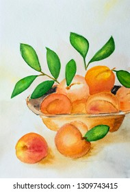 Watercolor hand drawn apricots on the table