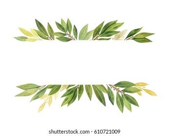 Watercolor hand drawn banner Bay leaf isolated on white background. Organic products for the design of healthy food, kitchen, market, menu, textiles.
