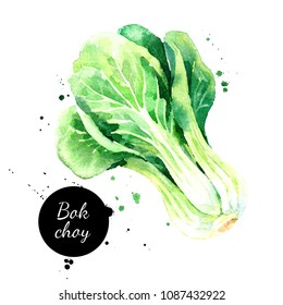 Watercolor hand drawn bok choy vegetables illustration. Painted sketch isolated on white background. Superfoods poster