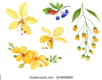 Watercolor hand drawn Cassia Fistula flower and berries isolated on white background. Golden shower watercolor illustration.