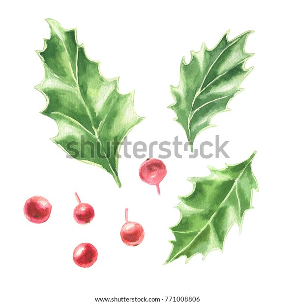 watercolor hand drawn christmas clipart holly stock illustration 771008806 https www shutterstock com image illustration watercolor hand drawn christmas clipart holly 771008806