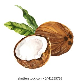 Watercolor hand drawn coconut with leaves botanical illustration isolated on white background