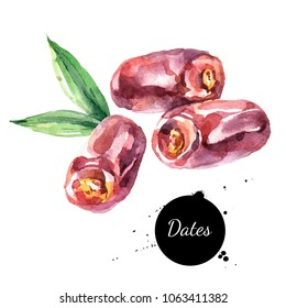 Watercolor hand drawn dates fruit illustration. Painted sketch isolated on white background. Superfoods poster