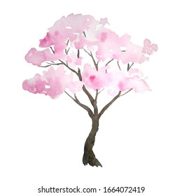 Watercolor hand drawn design illustration of pink cherry sakura tree in bloom blossom flowers. Hanami festival traditional japan japanese culture. Nature landscape plant. Spring march april concept.