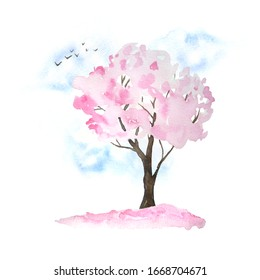 Watercolor hand drawn design illustration of pink cherry sakura tree in bloom blossom flowers, sky, birds, fallen petals. Hanami festival traditional japan japanese culture. Nature landscape plant
