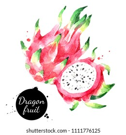 Watercolor hand drawn dragon fruit pitahaya illustration. Painted sketch isolated on white background. Superfoods poster