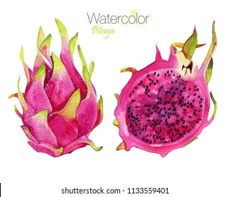 Watercolor hand drawn dragon fruit pitahaya illustration. Painted sketch isolated on white background. Superfoods poster. Isolated dragon fruit for label, menu, icon