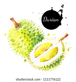 Watercolor hand drawn durian fruit illustration. Painted sketch isolated on white background. Superfoods poster