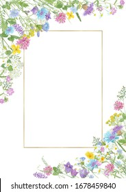 Watercolor hand drawn floral summer composition with  wild meadow flowers (clover, cornflower, tansy, cow vetch, chamomile, chicory) and gold frame with copy space isolated on white background