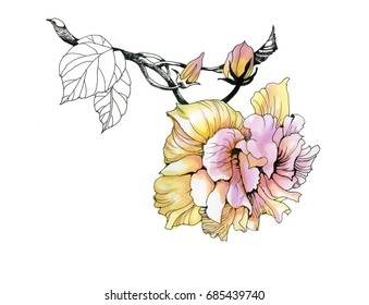 Watercolor hand drawn flower on branch on white background