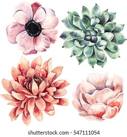 Watercolor hand drawn watercolor flowers and succulents. Isolated on white background. Perfect for any designs, t-shirts, phone cases, bags, and other. Floral clip-art.