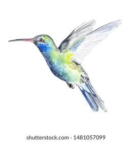 Watercolor Hand Drawn Hammingbird Calibrì Bird Illustration