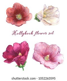 Watercolor hand drawn hollyhock flower set. Red, white, pink and dark magenta hollyhock hand drawn flowers. Isolated.