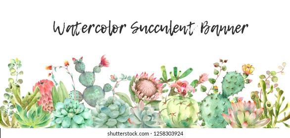 Watercolor hand drawn horizontal banner from succulent isolated on white background. Perfect for cards, banners or invitations, also greeting cards and prints. Rustic style design element.