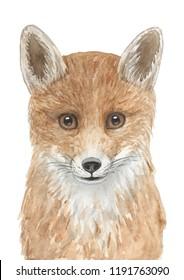 Watercolor hand drawn illustration of fox