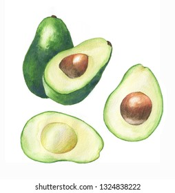 Watercolor hand drawn illustration with fresh green avocado on the white background