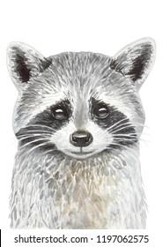 Watercolor hand drawn illustration of raccoon