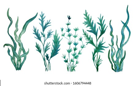 watercolor hand drawn illustration set with green blue water seaweed algae. Marine environment for cosmetics super food labels design packaging paper kelp laminaria spirulina healthy organic eating