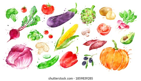 Watercolor hand drawn illustration set of vegetables. With paint smudges and splashes.