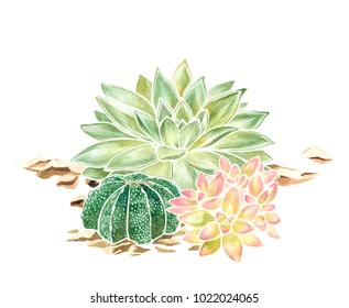 Watercolor hand drawn illustration of succulents isolated on a white background.