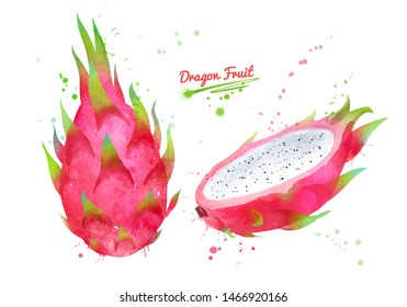 Watercolor hand drawn illustration of whole and half of Dragon fruit. With paint splashes.