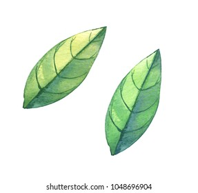 Watercolor hand drawn leaf set. Isolated.