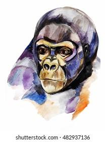 Watercolor hand drawn portrait of gorilla. Colorful illustration.
