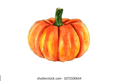 Watercolor hand drawn pumkin, vegetable isolated on white background. Good for book illustration, magazine or journal article.