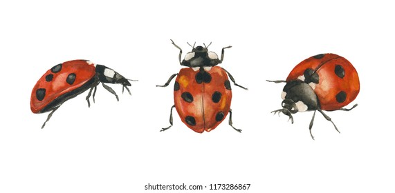 Watercolor hand drawn raster ladybugs. Insects isolated on white background.