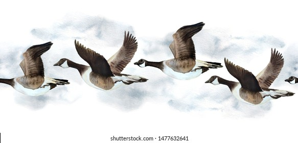 watercolor hand drawn seamless border with Canada goose geese flying in sky neutral calm soft natural colors grey brown ochre white endangered species for nature lovers birds animals in wood forest