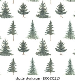 Watercolor hand drawn seamless pattern with spruce trees. Coniferous forest isolated on white background