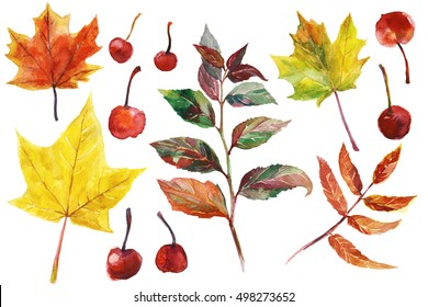 Watercolor hand drawn set of  colorful autumn leaves and small apples.