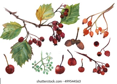 Watercolor hand drawn set of colorful fall leaves and small apples, acorn, hawthorn.