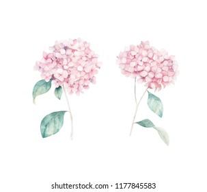 Watercolor hand drawn set. Flower hydrangea print. Botanical isolated design.
