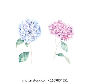 Watercolor hand drawn set. Flower hydrangea print. Botanical isolated design.