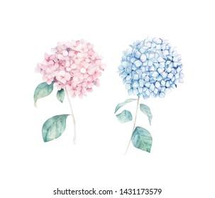 Watercolor hand drawn set. Flower hydrangea print. Botanical isolated design