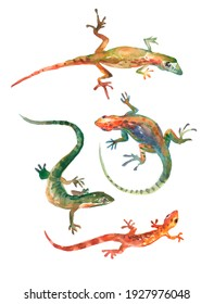 Watercolor hand drawn set of lizard