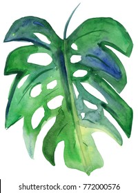 Watercolor hand drawn sketch illustration of green monster leaf on an abstract background art. Tropical leaf. watercolor.