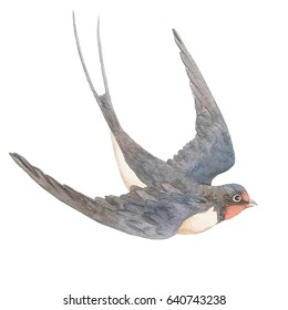 Watercolor hand drawn swallow isolated on a white background
