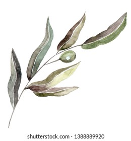 Watercolor hand drown plant. Botanical illustration on white background