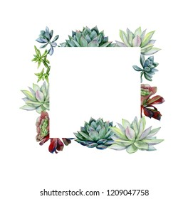 Watercolor hand painted banner with green succulents. Echeveria illustration, botanical painting of dudleya and zwartkop. Sempervivum art for invitation, wedding or greeting cards.