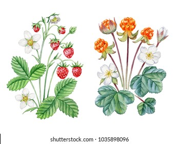 Watercolor hand painted berries. Can be used as romantic background for web pages, wedding invitations,  greeting cards, postcards, textile design, package design, patterns, prints.