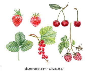 Watercolor hand painted berries. Can be used as background for web pages, invitations, greeting cards, postcards, poster, print, stickers, packaging design, textile design, tattoo, patterns.