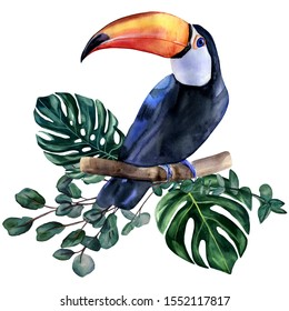 Watercolor hand painted colorful realistic illustration of toucan bird with monstera leaves and eucalyptus branches. Bright tropical composition is perfect for invitation for thematic wedding or party