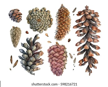 Watercolor hand painted cones. Can be used as background for invitations, greeting cards, textile design, package design, packaging paper, patterns, prints, postcards, wallpapers and so on.