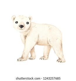 500 Polar Bear Pictures Royalty Free Images Stock Photos And