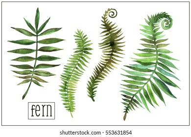 Watercolor hand painted fern leaves