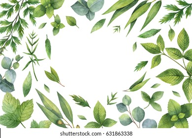 Watercolor hand painted floral card with green herbs and spices. Illustration for wedding invitation, kitchen, magazines, save the date, greeting design isolated on white background.