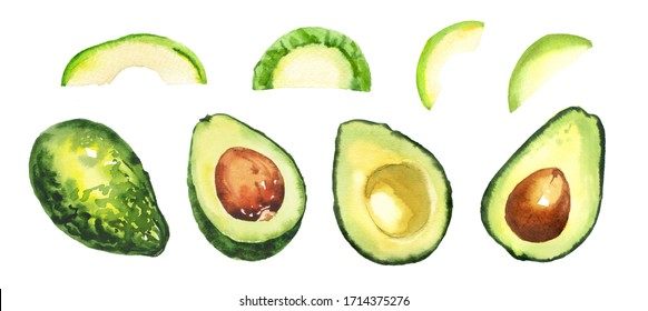 Watercolor hand painted green healthy avocado illustration set isolated on white background
