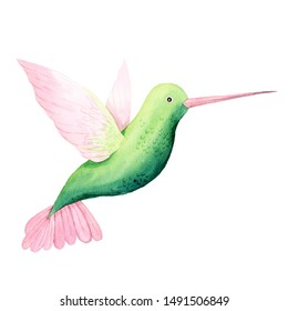 Watercolor hand painted green tropical hummingbird isolated on white. Bright jungle exotic clip art perfect for print poster, card making and party invitation